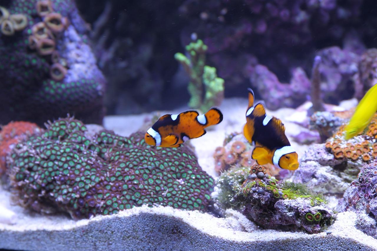 fish-397805_1280